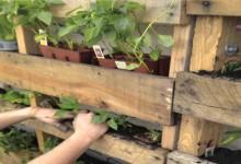 Vertical Garden Planting